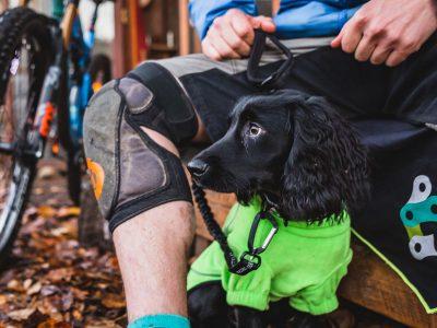 Bark + Ride Bungee Leash